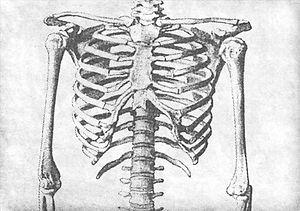 Human%2520Skeleton%2520Sketch_edited_edited.jpg