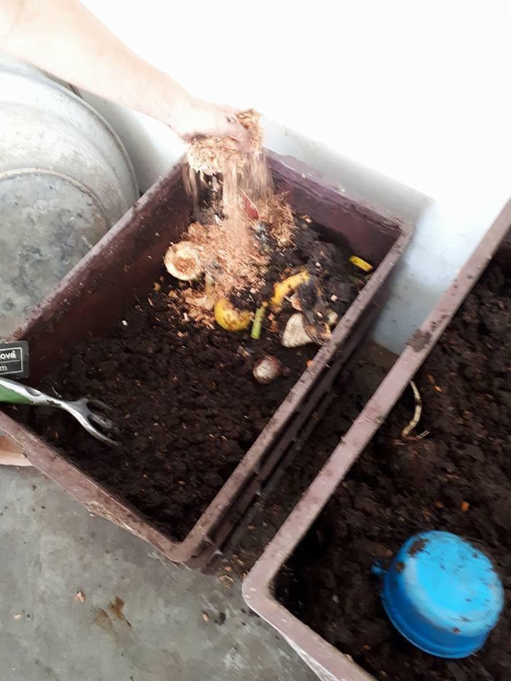 Minhocário em ação: colocando resíduos da cozinha, cobrindo com um pouco de húmus e uma camada de serragem.