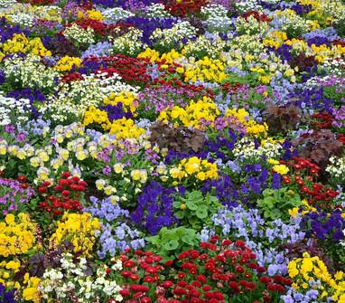 flowers-640192_1280.jpg