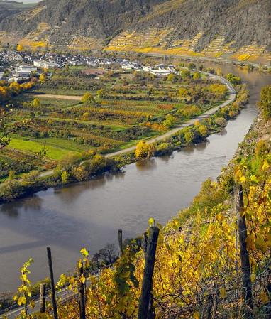 vineyards-4666055_1280.jpg