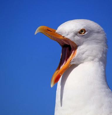 seagull-249638_1280.webp
