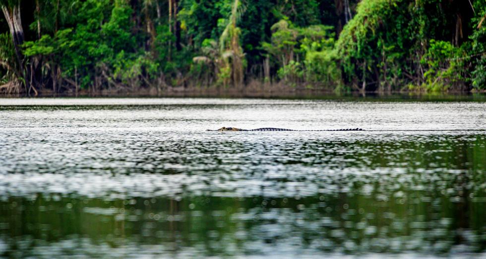 Nomadic Waters wildlife