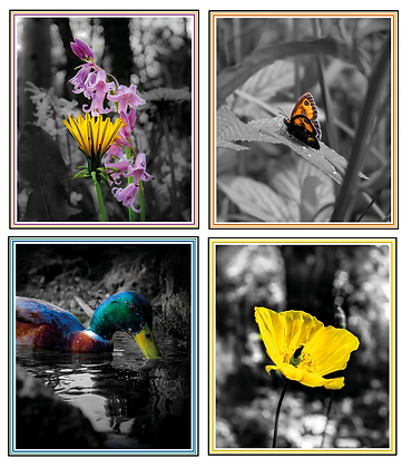 Colour Splash I - Notecard Collection