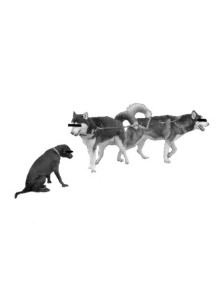 A_dog_facing_Wolves_new.jpg