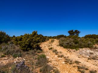 Detrás del cortijo sale un antiguo camino que sube hasta un pequeño cerro poblado de enebros, romero y un poco de esparto. Los enebrales son formaciones botánicas singulares y están protegidas. Son muy escasas.