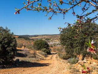 El camino desciende por el monte hasta un cruce en el que seguiremos por el camino de enfrente, entre almendros. A partir de aquí iremos prácticamente todo el camino rodeados de almendros. Los alrededores de la pedanía de Pradorredondo son uno de los lugares con más almendros de la comarca. Se recomienda encarecidamente la realización de la ruta con los almendros en flor (finales de febrero a principios de marzo, dependiendo del año). El paisaje es impresionante, así como el olor a miel que inunda el lugar.