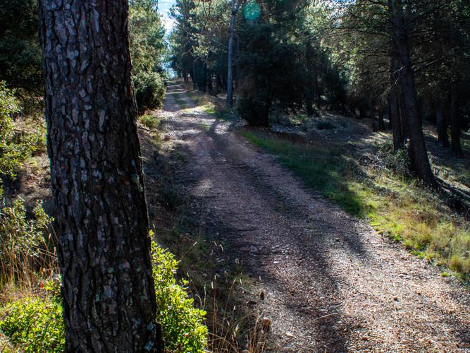 Nuestra ruta atraviesa este territorio que desde los años setenta del XX está repoblada de pinar, constituyendo una masa forestal forestal de más de cuatrocientas hectáreas.