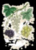 vino-omodei_edited.png