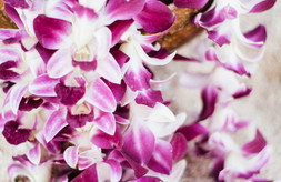 Purple Leis.jpg