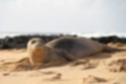 Hawaii beach permit