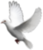 wedding-dove-png-hd-white-dove-images-th