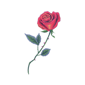 tattly_red_rose_berkley_illustration_00_