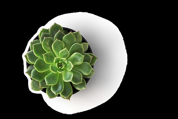 plant.webp