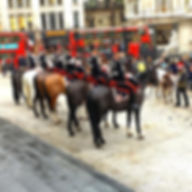 6 of our fabulous horses went on parade last Thursday for the celebration of the livestock festival!