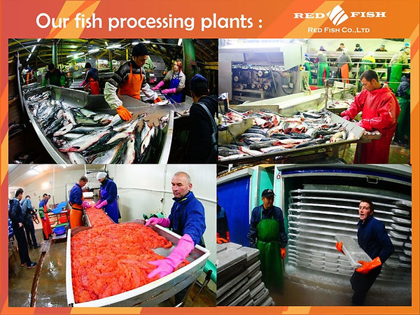 Our processing plants Red Fish Company
