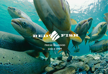 Red Fish Co since 1999