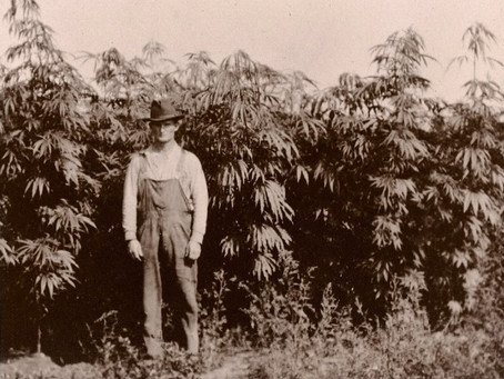 The Rise and Fall of Hemp in America