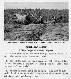 1919_INTL_HARV_PIC_PAGE11.JPG