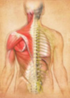 osteopathy011.jpg