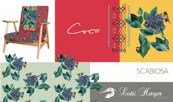 Scabiosa | Asita Collection