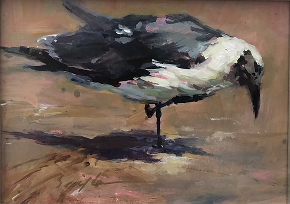 SOLD —-Old Laughing Gull