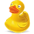 ducky_edited.png