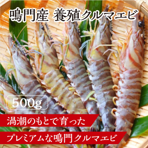 <鳴門産>冷凍クルマエビ(500g)