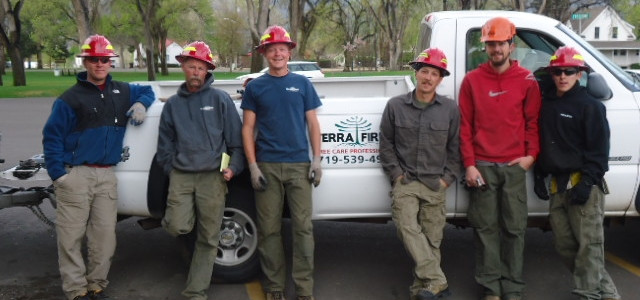 Three crews of Professional Foresters and Arborists