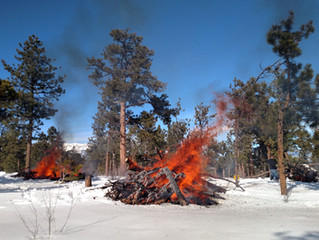 Fire Danger - The Importance of Defensible Space
