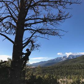 Professional Tree Climbing