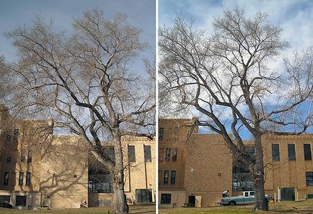 Tree Service in Salida and Buena Vista Colorado