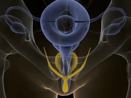 Внутренний клитор