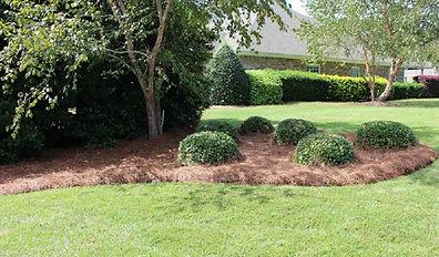 shrub-head-1400x821.jpg
