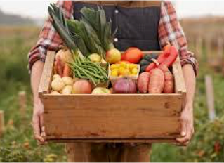Harvest time and Food banks