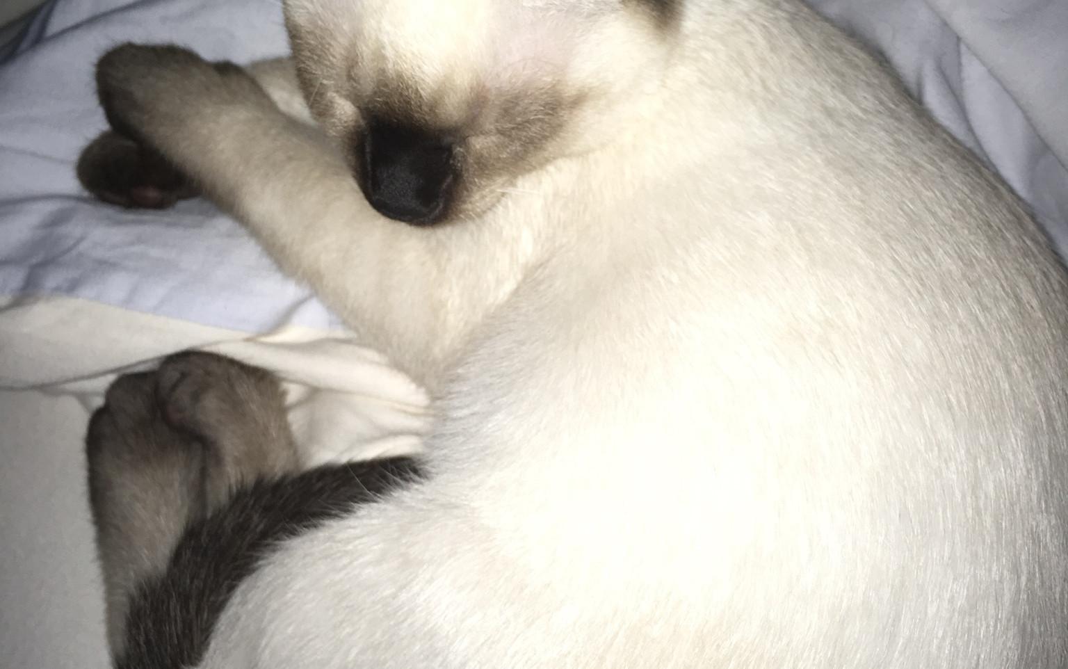 IC MTG's Kimba schlafend