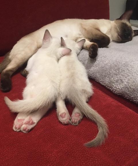 Ginger mit Cleo & Coco4.jpeg.JPG