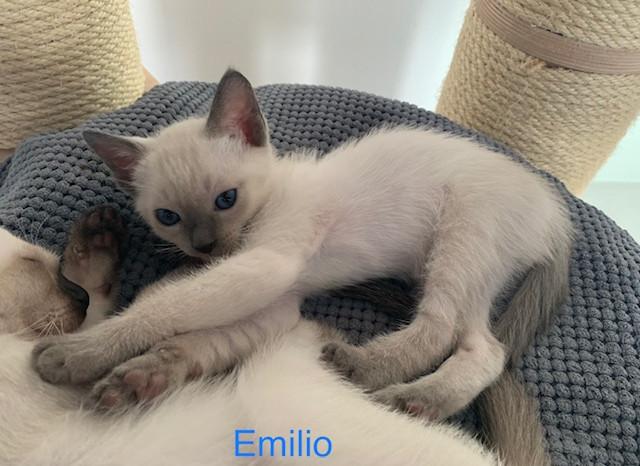 Emilio4.jpg