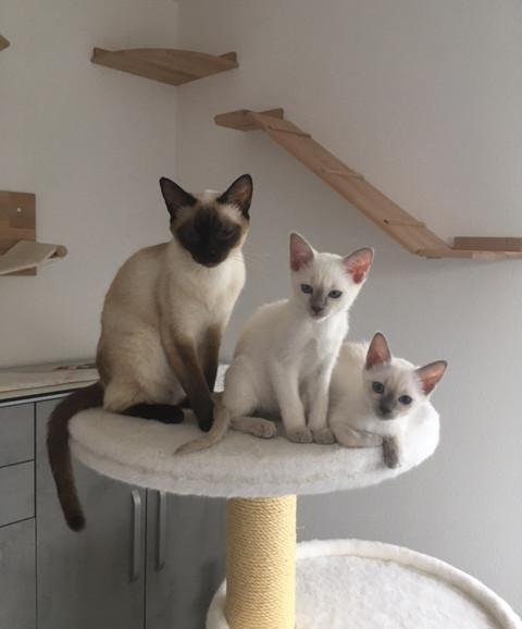 Ginger mit Cleo & Coco - schau.JPG