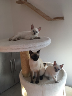 Ginger mit Cleo & Coco 12-2020