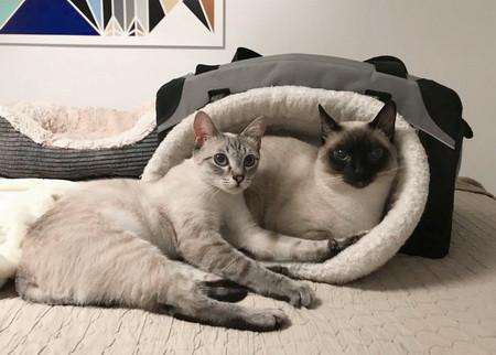 Camille & Kimba