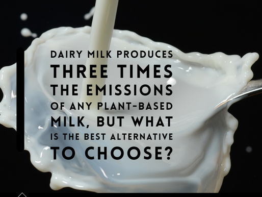 Dairy vs plant-based milk - what's the best for the planet?