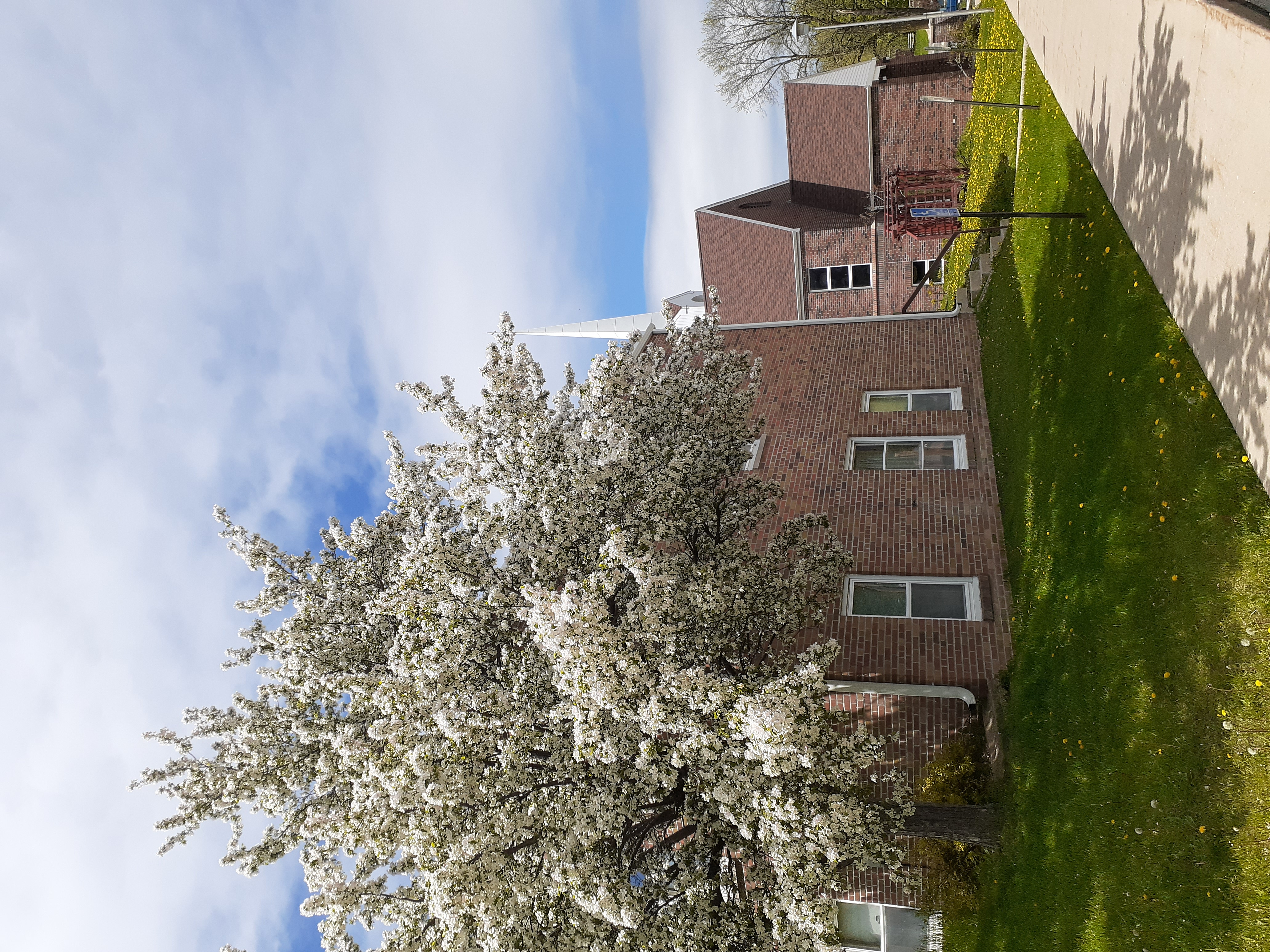 blooming tree 3