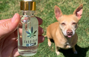 cannibabe-pet-cbd-oil-cannabidiol-dog-ca