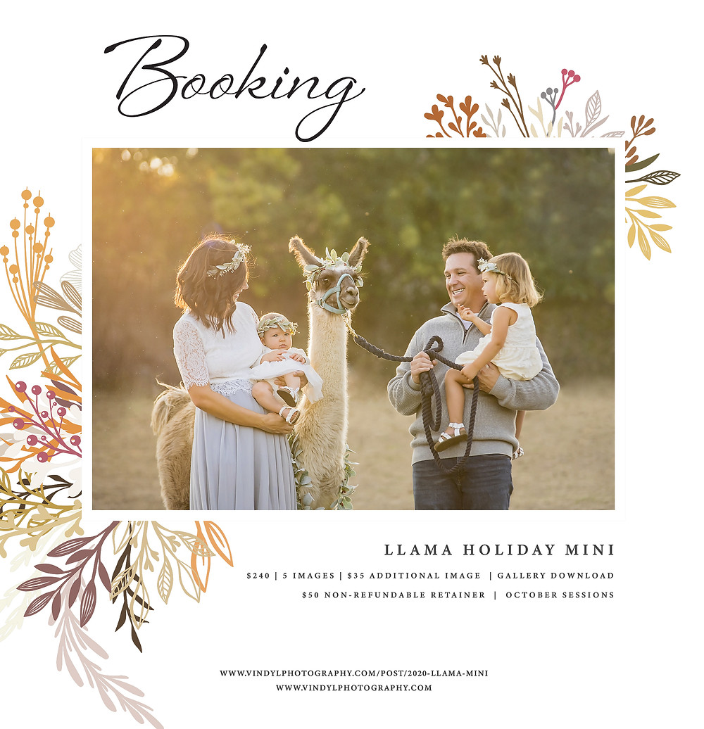 Roseville fall holiday mini session with Llama