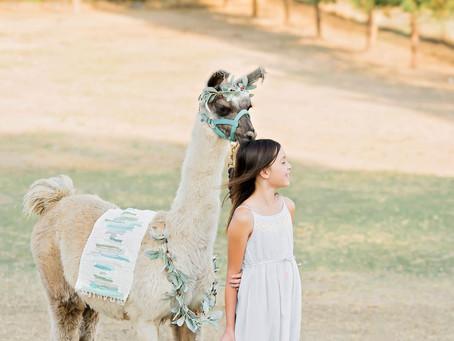Llama Holiday Mini - Orangevale Family Mini