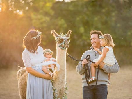 2020 Llama Holiday Mini Session