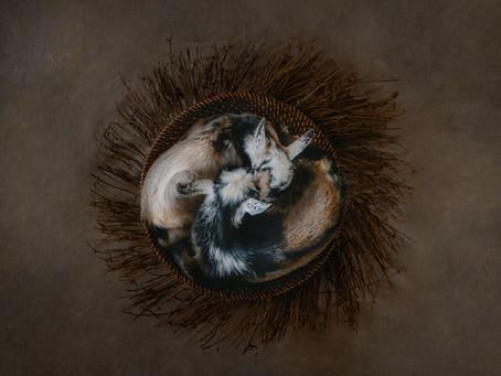 Furbabies Newborn Photography