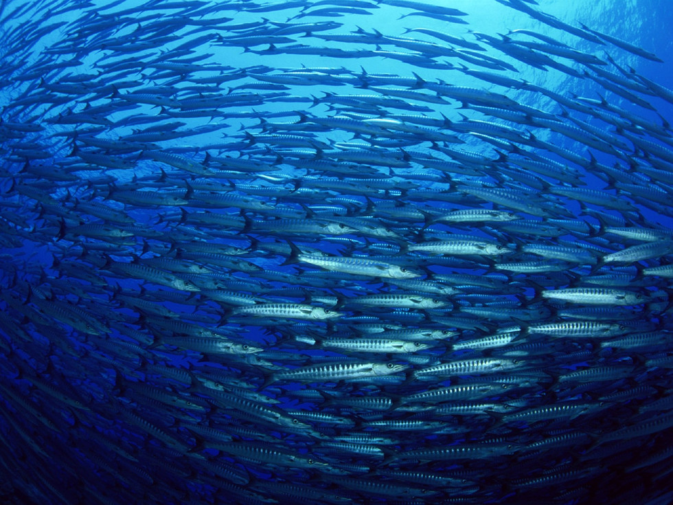 Herrings - We Would Like A Poem From You!