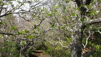 春の日差しの尾根道