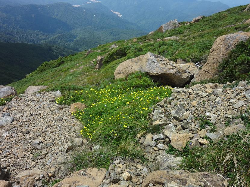 小至仏山の花畑